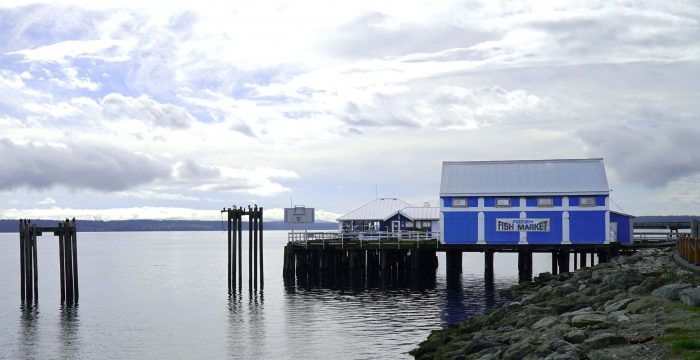 [Caption: The view behind the Shaw Centre for the Salish Sea. As we filmed, cormorants landed on wood dolphins (the tall structures on the left side of the photograph) to sunbathe. They spread their wings, large and wide, to dry them.]
